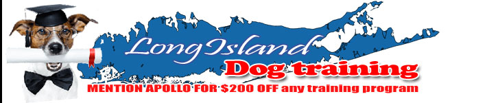 Long Island Dog Training By Danny