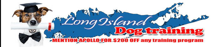 Long Island Dog Training